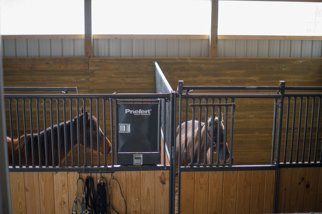 What Kind Of Stalls The Horse Forum